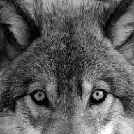 Wolf_fr